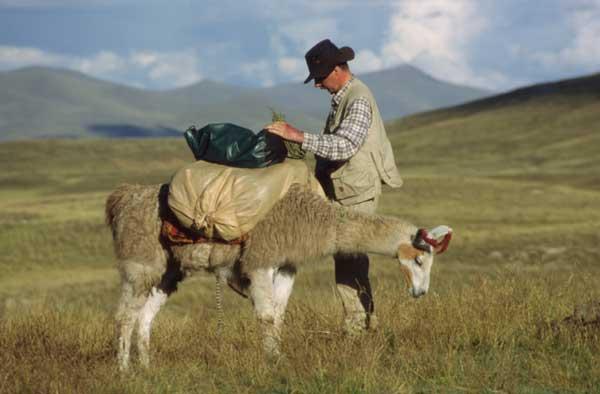 Med Hest Og Lama Til Amazonflodens Udspring